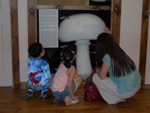 Mushroom Exhibit